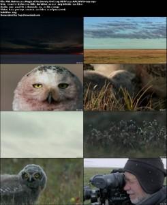 PBS - Nature: Magic of the Snowy Owl | تاپ 2 دانلود