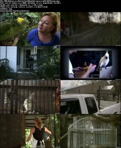 Nature: Parrot Confidential | تاپ 2 دانلود