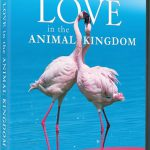 دانلود مستند PBS – Nature: Love in the Animal Kingdom 2013
