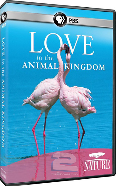 PBS - Nature: Love in the Animal Kingdom | تاپ 2 دانلود