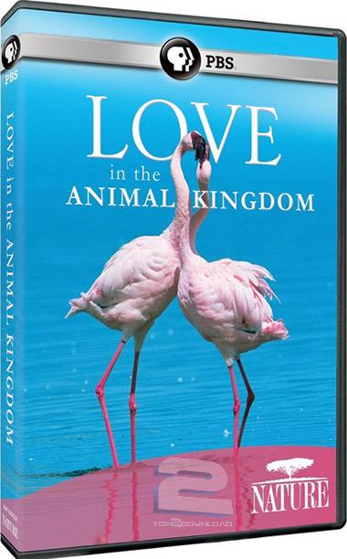 PBS - Nature: Love in the Animal Kingdom   تاپ 2 دانلود