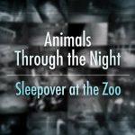 دانلود مستند BBC Animals Through the Night: Sleepover at the Zoo 2014