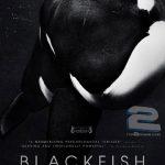 دانلود مستند ماهی سیاه Blackfish 2013