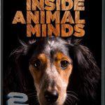 دانلود مستند PBS – Inside Animal Minds: Dogs & Super Senses 2014