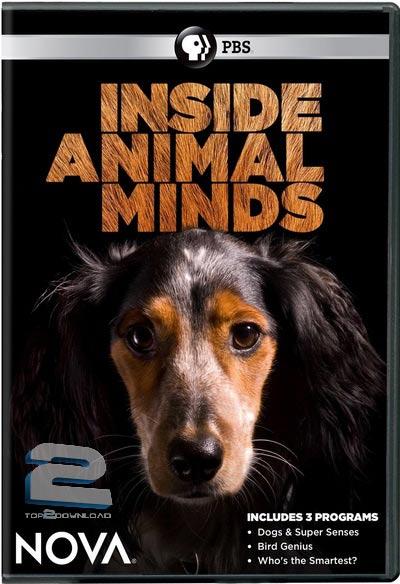 PBS - Inside Animal Minds: Dogs & Super Senses | تاپ 2 دانلود