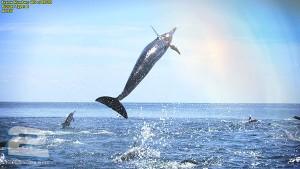 BBC - Dolphins: Spy in the Pod | تاپ 2 دانلود