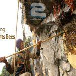 دانلود مستند ZED – Facing the Giant Bees 2011