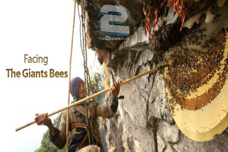 ZED - Facing the Giant Bees | تاپ 2 دانلود