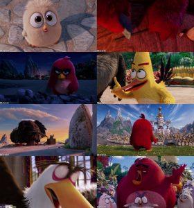 دانلود انیمیشن Angry Birds 2016 | تاپ 2 دانلود